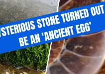 Mysterious stone turned out to be an 'Ancient EGG'