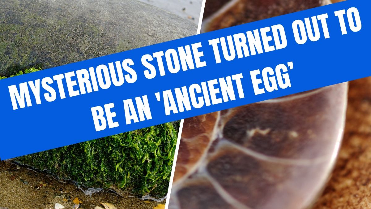 mysterious ancient egg